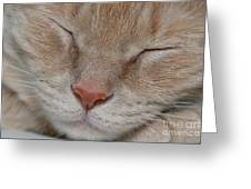 Sleeping Cat Face Closeup Greeting Card