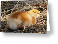 Sleeping Chick Greeting Card