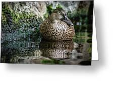 Sleeping Duck Greeting Card