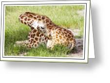 Sleeping Giraffe Greeting Card