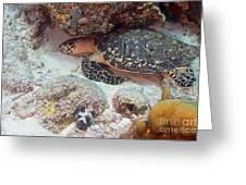 Sleeping Hawksbill Sea Turtle Greeting Card