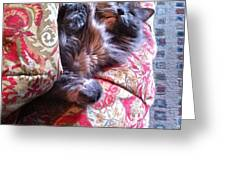 Sleeping In Today Greeting Card by Katie Cupcakes