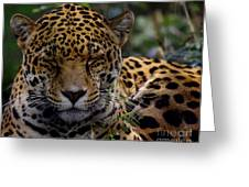 Sleeping Jaguar Greeting Card