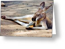 Sleeping Kangaroo Greeting Card