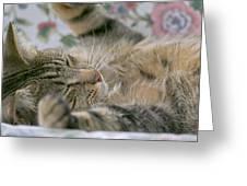 Sleeping Kitty Greeting Card