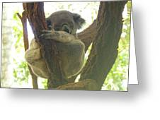 Sleeping Koala In Tree Greeting Card