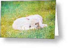 Sleeping Lamb Green Hue Greeting Card