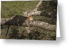 Sleeping Leopard Greeting Card