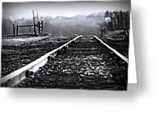 Sleeping On The Tracks Greeting Card