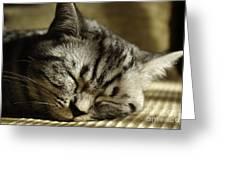 Sleeping Pet Greeting Card