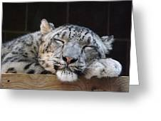 Sleeping Snow Leopard Greeting Card