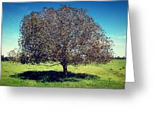 Sleeping Tree  Greeting Card