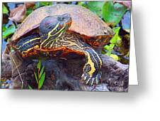 Sleeping Turtle Greeting Card by Annette Allman