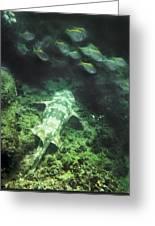 Sleeping Wobbegong And School Of Fish Greeting Card