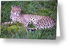 Sleepy Cheetah Greeting Card