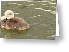 Sleepy Cygnet Greeting Card