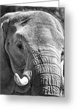 Sleepy Elephant Lady Black And White Greeting Card