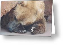 Sleepy Grizzly Bear Greeting Card