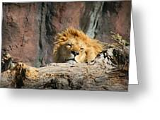 Sleepy Lion Greeting Card