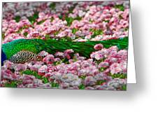 Sleepy Peacock Greeting Card