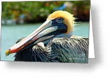 Sleepy Pelican Greeting Card