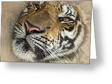 Sleepy Tiger Portrait Greeting Card