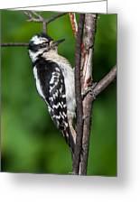 Sleepy Woodpecker Greeting Card
