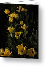 Sleepy Yellow Tulips Of The Silent Nocturne Greeting Card