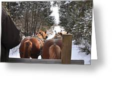 Sleigh Ride Dwn A Snowy Lane Greeting Card