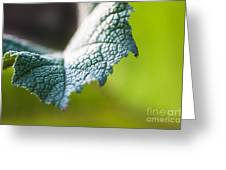 Slice Of Leaf Greeting Card by John Wadleigh