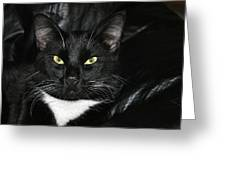 Slick The Black Cat Greeting Card