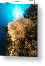 Slimy Leather Coral And Tropical Reef In The Red Sea. Greeting Card
