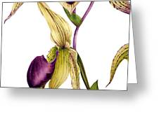 Slipper Orchid Greeting Card