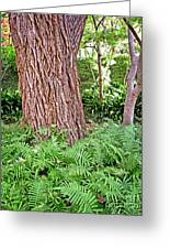Slippery Elm And Ferns Greeting Card