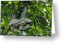 Sloth 8 Greeting Card