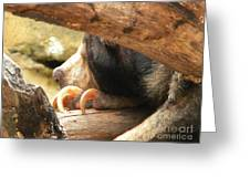 Sloth Bear Greeting Card
