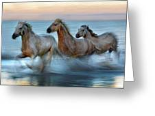 Slow Motion Horses Greeting Card
