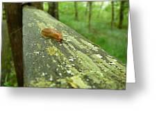 Slug Life Greeting Card