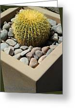 Small Barrel Cactus In Planter Greeting Card
