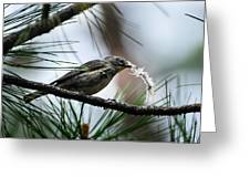 Small Bird Greeting Card