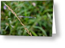 Small Blue Dragonfly Greeting Card