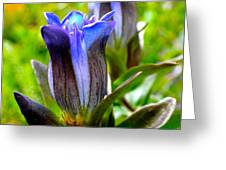 Blue Bliss Greeting Card