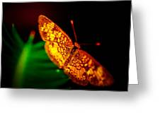 Small Butterfly Greeting Card