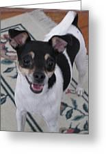 Small Dog Big Smile Greeting Card