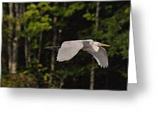 Small Egret Flying - C2730c Greeting Card