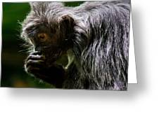 Small Monkey Eating Greeting Card