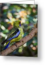 Small Parrot Greeting Card