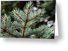 Small Pine Greeting Card