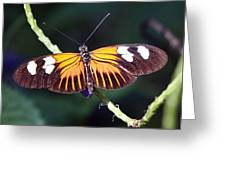 Small Postman Butterfly Greeting Card