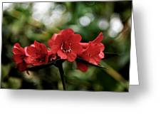 Small Red Flowers Greeting Card